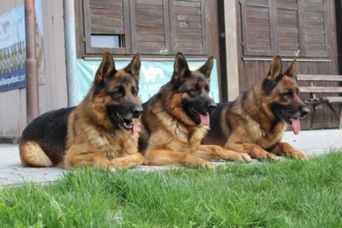Garret, Gwynet, Granit